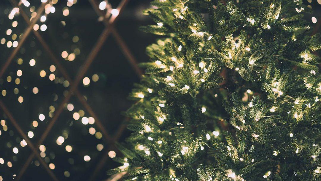 Gdzie kupić choinki na Boże Narodzenie?